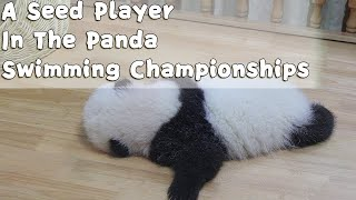 A Seed Player In The Panda Swimming Championships | iPanda