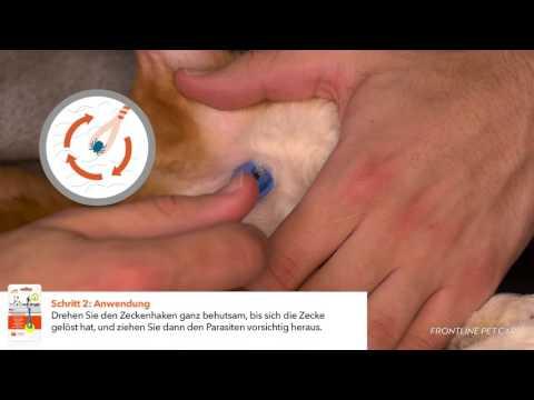 FRONTLINE PET CARE Zeckenhaken – wie Sie am besten Zecken bei Hunden und Katzen  entfernen
