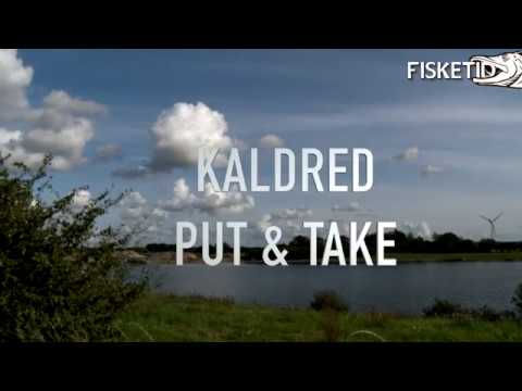 Størfiskeri i Kaldred Put & Take