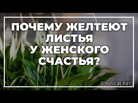 Почему желтеют листья у женского счастья?   toNature.Info