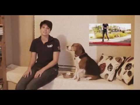 Michelle Pellum - Becoming a Certified Dog Trainer -Animal ...