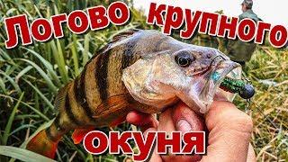 Рыбалка в лебедяни вк
