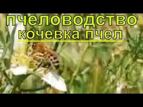 Пчеловодство,Кочевка пчел,Переезд пасеки ,на медосбор ак курай