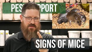 What Are the Signs of a Mouse Infestation? | Pest Support
