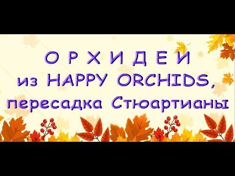 ОРХИДЕИ из HAPPY ORCHIDS,пересадка СТЮАРТИАНЫ из Серамиса.Привет Людмиле Квашиной :)