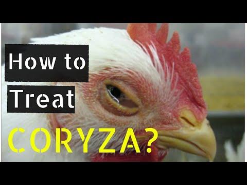 , title : 'How to Treat Coryza ?