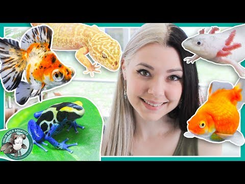 All My Pets in One Video!
