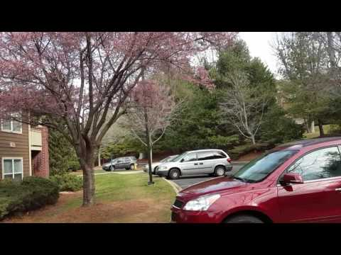 Цветущее дерево в феврале.