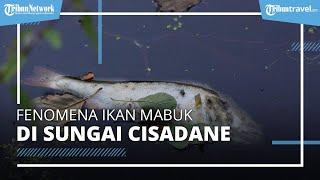 Viral di Medsos, Fenomena Ikan Mabuk dan Sampah Berserakan di Sungai Cisadane Tangerang