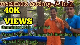 Ornamental Fish Farm Visit|പലതരം ഗപ്പികൾ ,Angel, Bettas ||Breeding Tips||Our Dream Factory