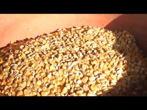 Cattle Feed Machine at Best Price in India