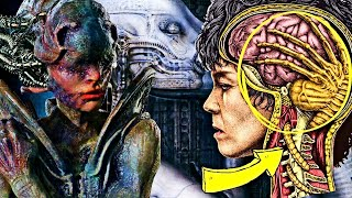 8 Mind-Bending Mysteries Of Xenomorph Anatomy Unraveled - Reproduction To Origin Everything Explored