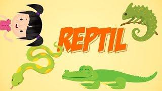 Belajar Mengenal Nama-nama Reptil | Bunbun Learning Reptile