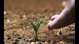 【越哥】男子被遗忘在火星上,靠种植一种农作物生存了561天,方法有点恶心!