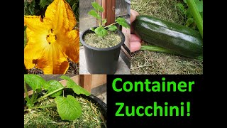 How To Grow Zucchinis In Containers