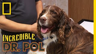 What's Bothering Ranger?   The Incredible Dr. Pol...