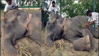 Chú voi rơi nước mắt vui mừng vì được giải cứu sau 50 năm gông cùm đói khát
