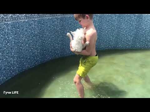 Гучи в бассейне