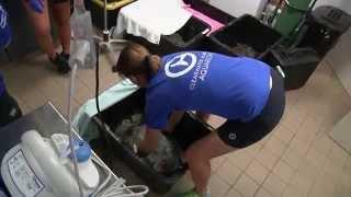 Rescue of Green Sea Turtle, Xiphosura