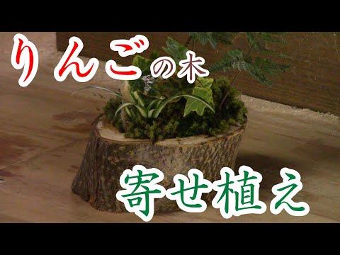 , title : 'リンゴの木に寄せ植え 和りんご間伐材の再利用 その3