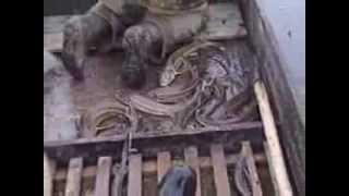 Рыбалка стерляди на самоловы