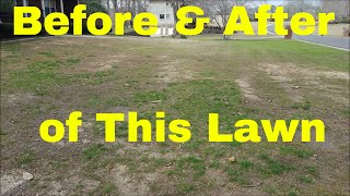 Bermuda Lawn on Life Support - See the Recovery after 4 Months