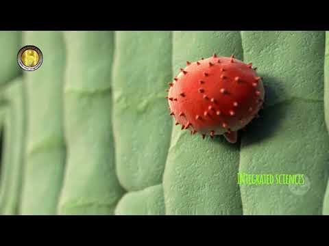 Papiloma viral em caes