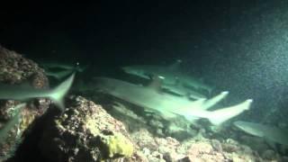 Plongée de nuit à Manuelita