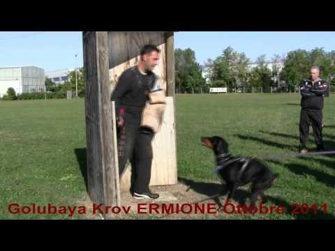 immagine di anteprima del video: Golubaya Krov ERMIONE Ottobre 2011