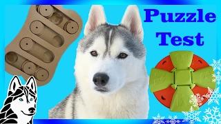 Testing My Dog's Intelligence   Puzzle Test Challenge   DOG IQ Test   W Gohan The Husky