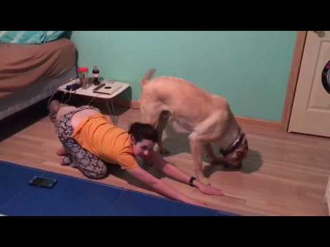YOGA FAILS! |me And My Service Dog|