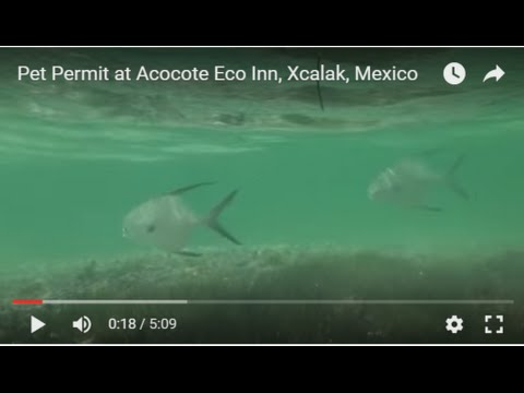 Youtube Video of our Pet Permit, Acocote Eco Inn, Xcalak, Mexico