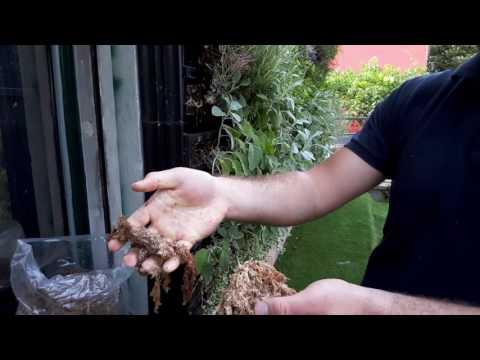 Il modo di liberarsi da un fungo di unghie