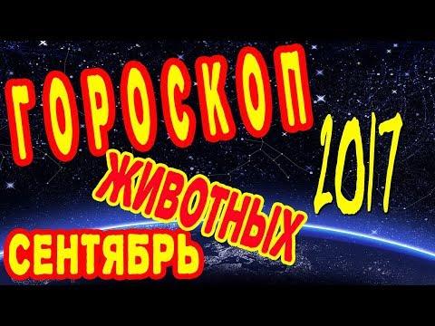 Гороскоп 2016 змея-дева