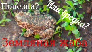 Полезны или вредны жабы?\\Good or bad for the frogs?