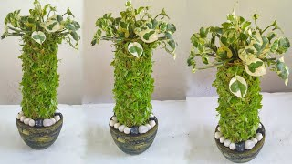 Amazing Indoor Garden Ideas So Easy/gardening Ideas For Home