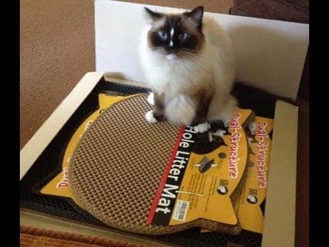 Moonshuttle Blackhole Cat Litter Mats Review