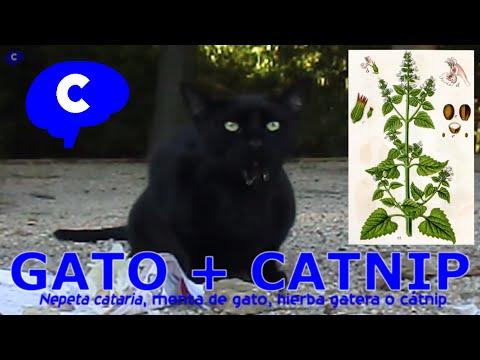 Gatos afectados por el catnip
