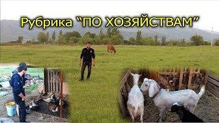 "Рубрика ""По Хозяйствам"" - Домашнее хозяйство у Аскера"