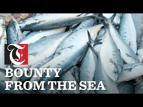 Muttrah's bounty from the sea