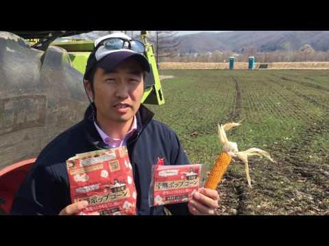 Japanese grain grower makes his own popcorn
