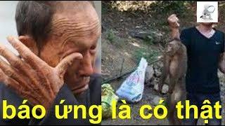 Bắt con khỉ mang thai ngâm rượu lần lượt cả gia đình đều 'gánh nghiệp', ông bố hối hận kêu trời...!!