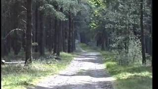 preview picture of video 'Brandon Country Park June 1991'