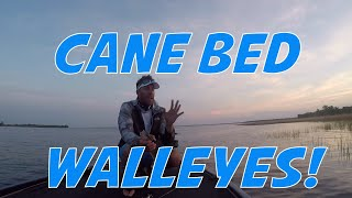 Cane Bed Fishing for Walleyes on the Upper Lakes of Lake Winnebago in Winneconne, WI