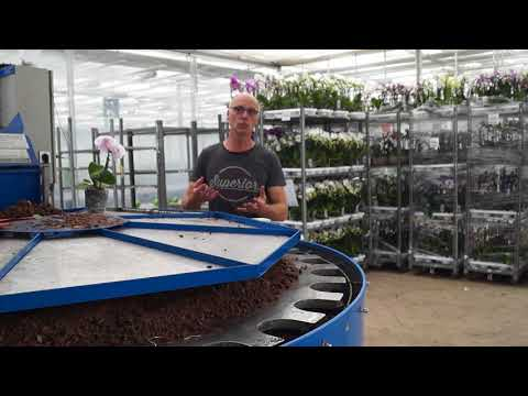 Orchideen Erde, darauf sollten Sie achten  Profitipps vom Gärtner