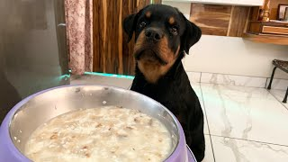 Home-made Food for Dogs with 100% Result   All Day Meals