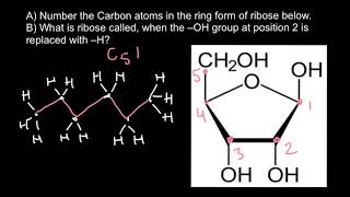 How to number carbon atoms