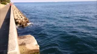 神奈川海釣り場情報八景島対岸