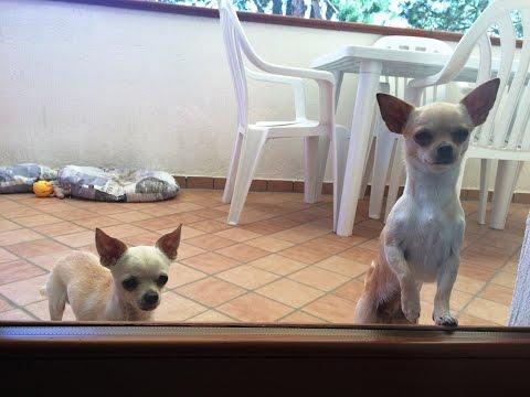 Come fare tyubazh a lyambliya a - La fotografia striscia a cuccioli