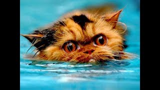 Best Funny Cats in Water || Scared to Jump